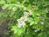 10-heemreis-limburg-9-juni-2012-blauwe-bessenkwekerij