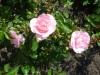35-heemreis-limburg-9-juni-2012-rozentuin
